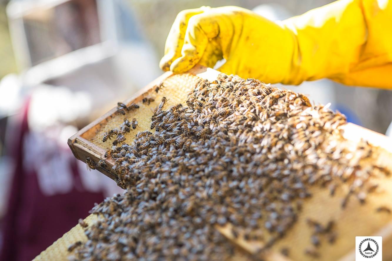 Cesena BCity, il progetto per rendere la città Bee friendly